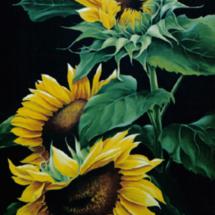Maria Klokkou - Sunflowers